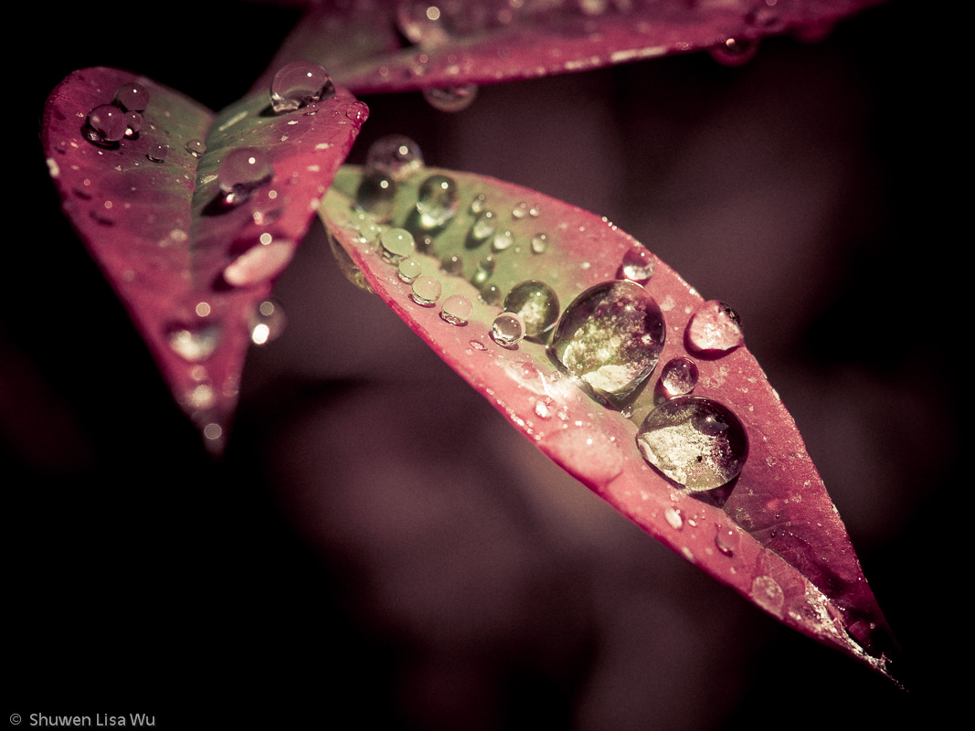 Waterdrops from irrigation on colorful little leaves sparkle in the morning sun.