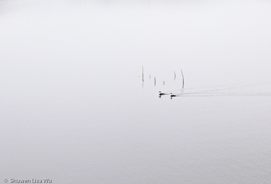 Minimal photo of birds at Lake Hodges, San Diego