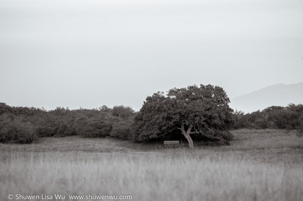 Oak and Bench at Sylvan Meadows, Santa Rosa Plateau Ecologocial Preserve.