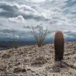 Barrel Cactus & Ocotillos, Canyon Sin Nombre, Carrizo Badlands, Southern Anza Borrego, San Diego County, CA.