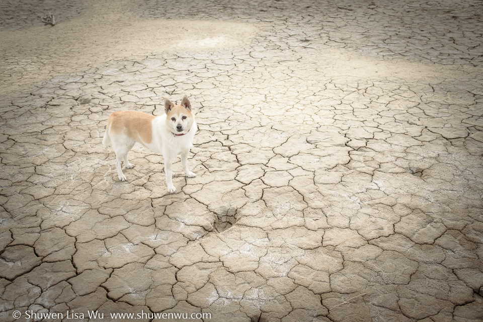 Dog at Clark Dry Lake