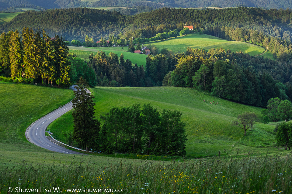 Black Forest Landscape