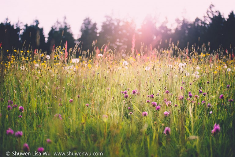 Pasture with wildflowers, Black Forest, Germany. June 2014.