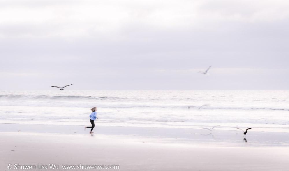 Chasing Gulls