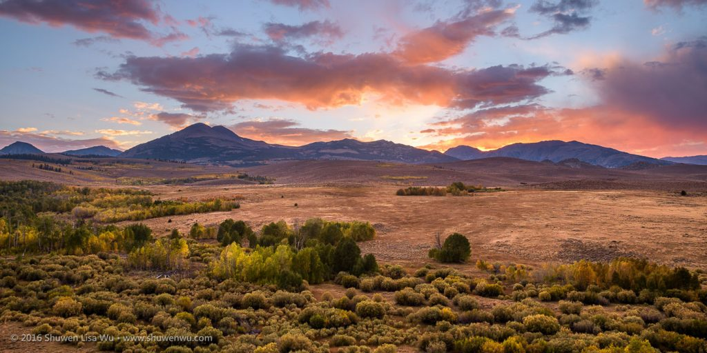 Fall color trees at sunset, Dunderberg Meadows near Conway Summit/Bridgeport, Mono County, California. September 2016.