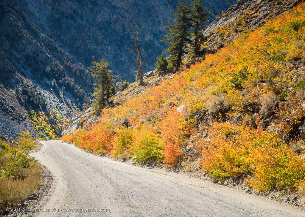 Fall colors of small vegetation along North Lake Road, Bishop, California, September 2016.
