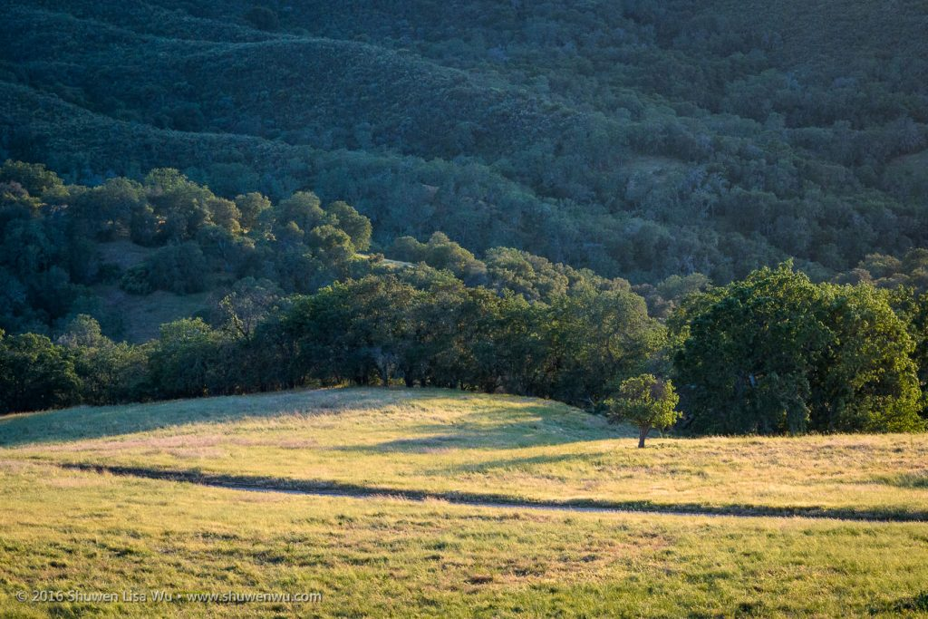 Meadow, Oaks and Chaparral, Adelaide, Paso Robles, California, April 2016.