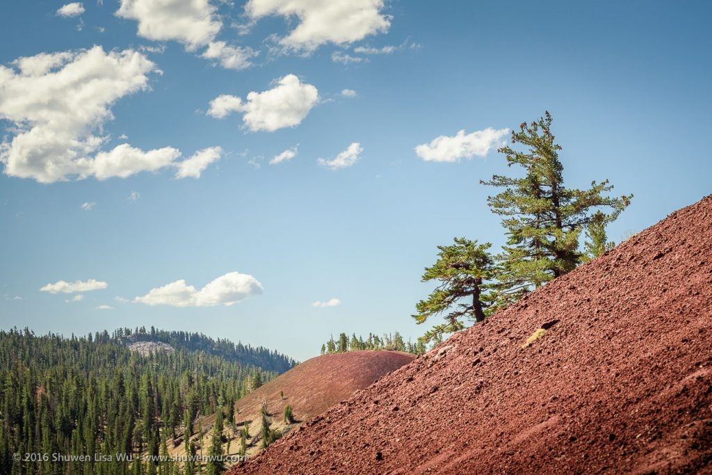 Trees and Red Cones, Mammoth Lakes, California, September 2016.