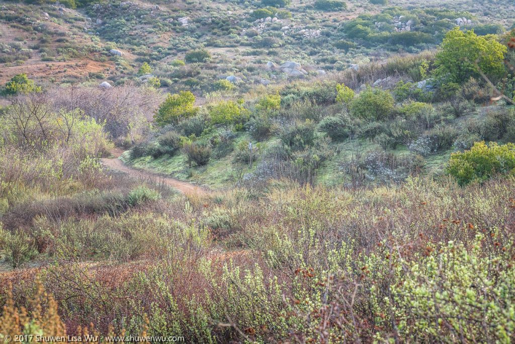 Pastel colors as the landscape reawakens after winter rains at Lake Hodges, Rancho Bernardo, San Diego County, California. December 2016.