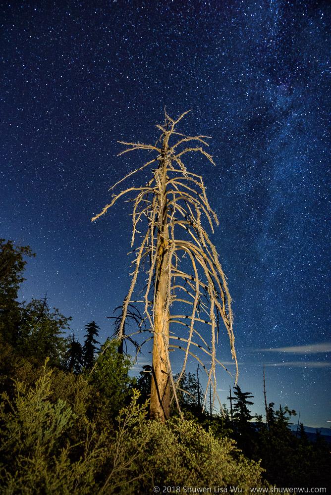 Tree and Stars